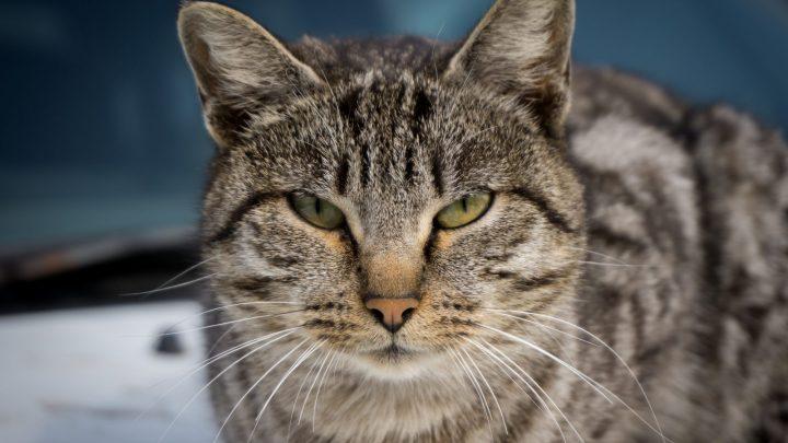 Il tuo gatto ti vuole uccidere… di coccole!